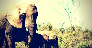 séjour au Laos - Eléphants